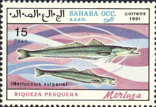 Merluccius vulgaris