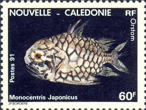 Monocentris japonicus
