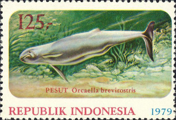 Orcaella brevirostris