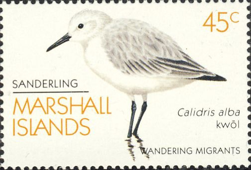 Calidris alba