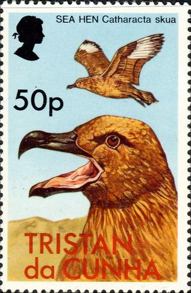 Stercorarius antarcticus hamiltoni