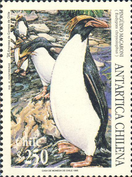 Eudyptes chrysolophus