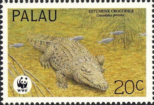 Crocodylus porosus