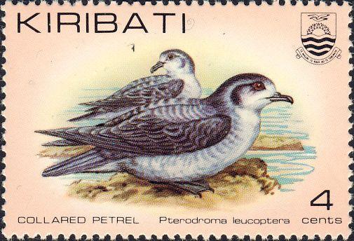 Pterodroma leucoptera