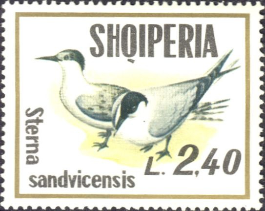 Sterna sandvicensis