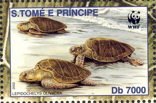 Lepidochelys olivacea