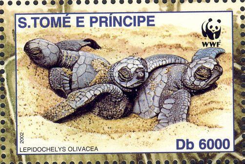 Lepidochelys olivacea