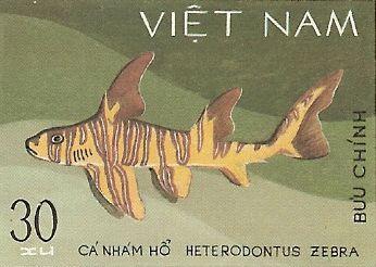 Heterodontus zebra