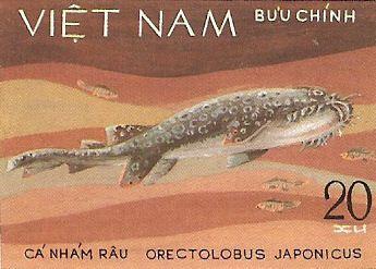 Orectolobus japonicus
