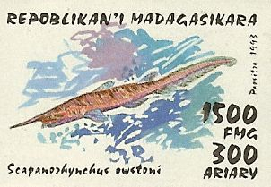 Scapanorhynchus owstoni
