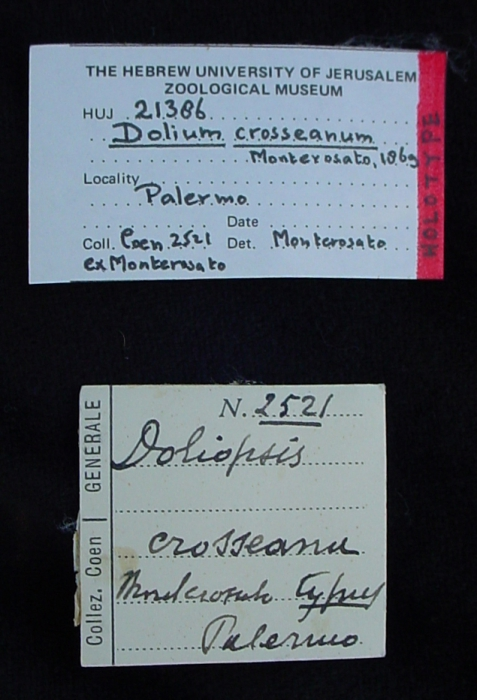 Label of the holotype
