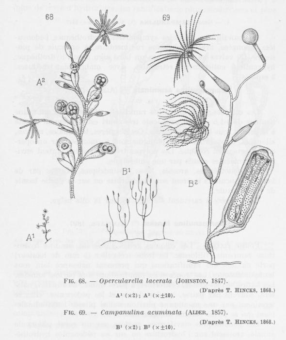 Leloup (1952, fig. 68 & 69)