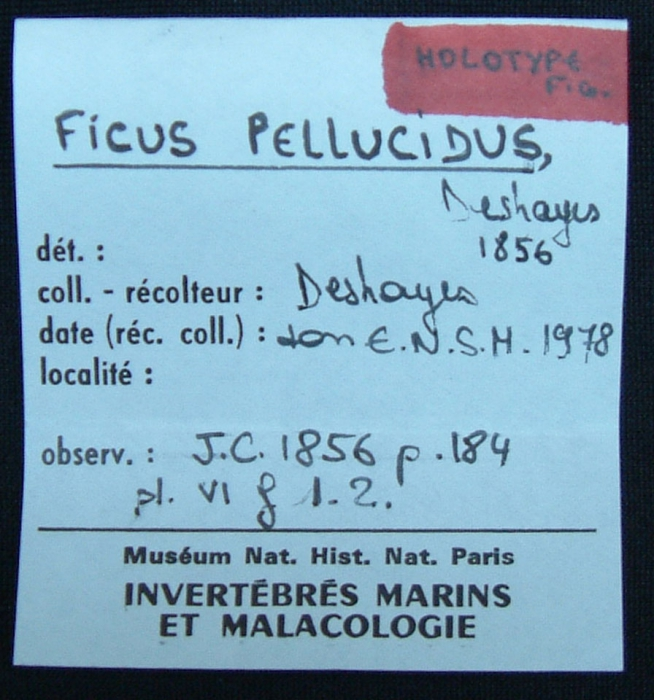 Holotype, label