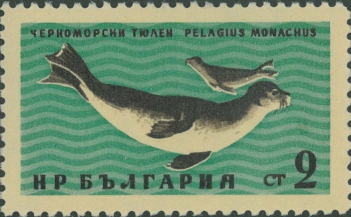 Monachus monachus