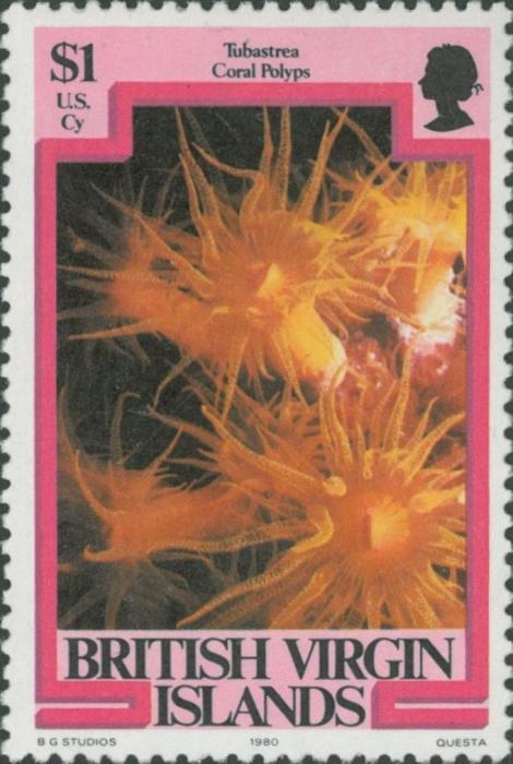 Tubastraea sp.