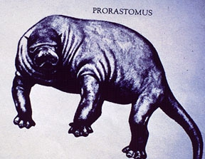 Prorastomus, artist rendition based on skeletal morphology