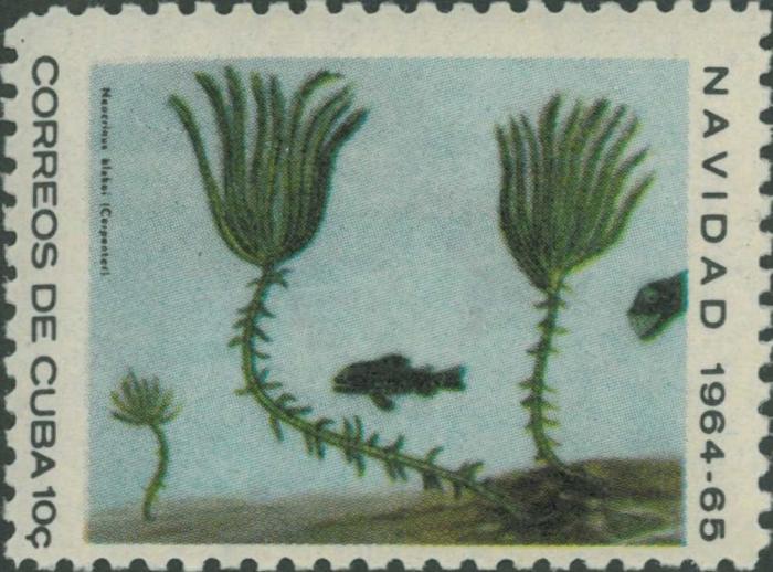 Neocrinus blakei