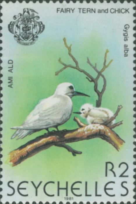 Gygis alba
