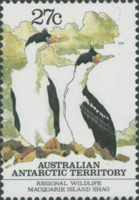 Phalacrocorax atriceps purpurascens