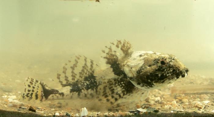 zeedonderpad