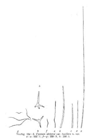 Cyamon agnani (Boury-Esnault, 1973)