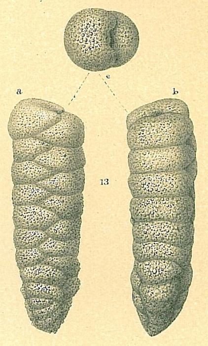 Dorothia bradyana