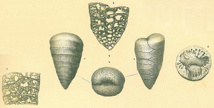 Textulariella barrettii