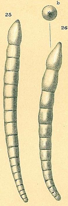 Dentalina subemaciata