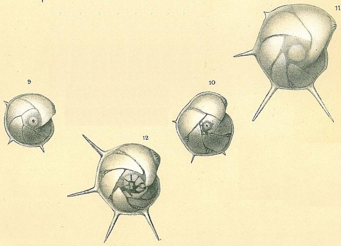 Lenticulina calcar