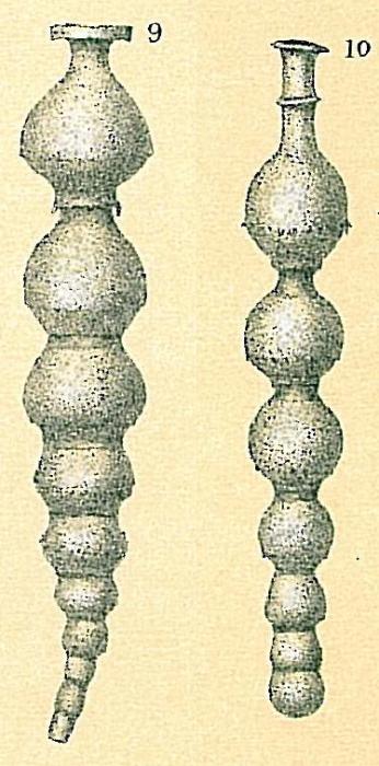 Siphonodosaria lepidula (Schwager, 1866)