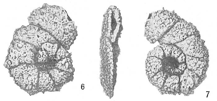 Ammobaculites americanus