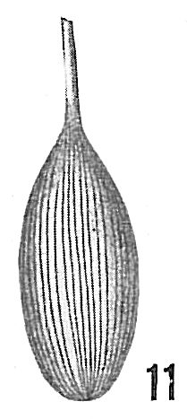 Lagena substriata