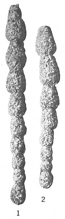 Reophax nodulosus