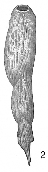 Reophax spiculotestus