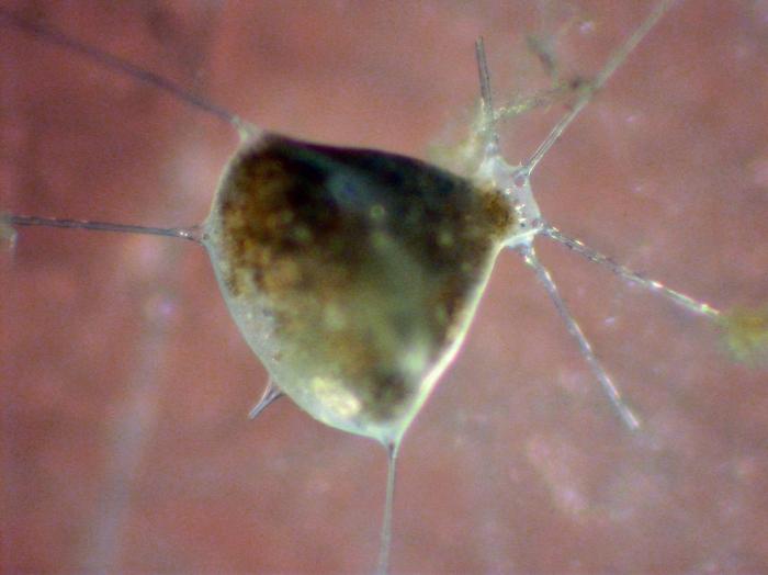 Tuscaroridae