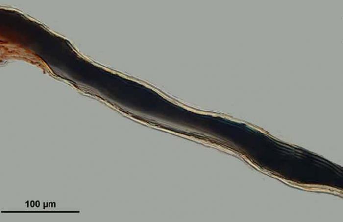 Suberea etiennei fiber