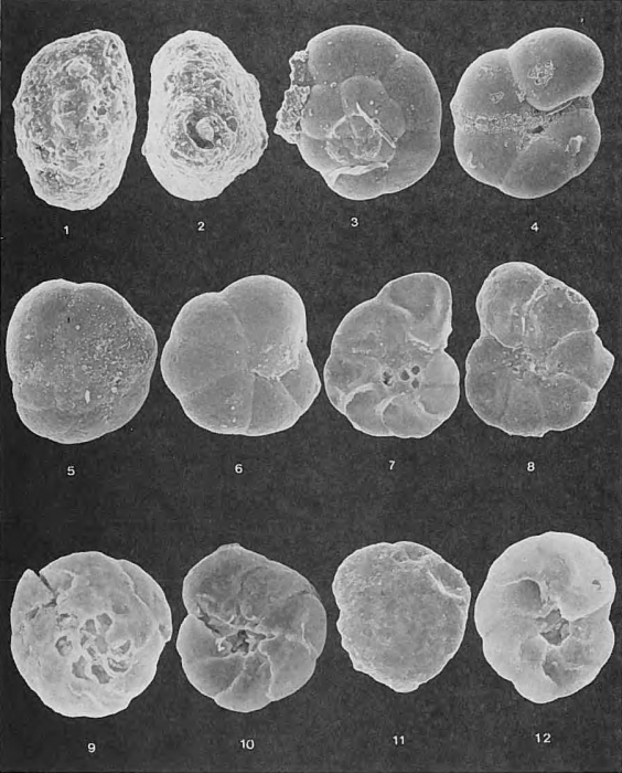 Foraminifera - Plate 4 - Rzehakinidae, Textulariidae