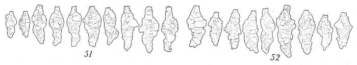 Reophax scorpiurus