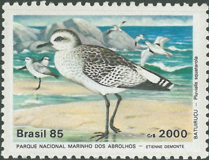 Pluvialis squatarola