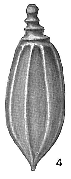 Lagena mucronulata