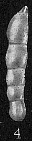 Dentalina sidebottomi