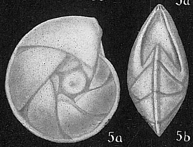 Robulus limbosus