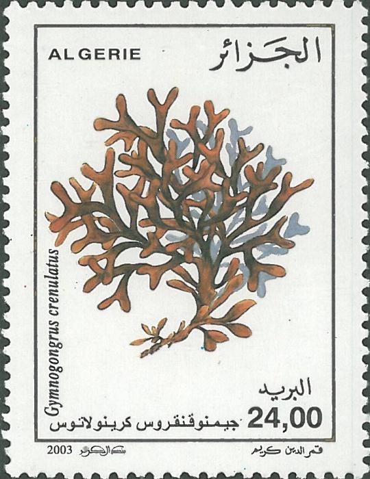 Gymnogongrus crenulatus