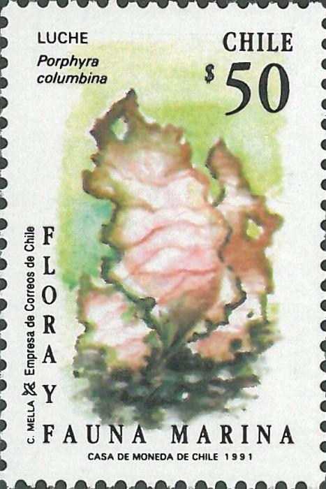 Porphyra columbina
