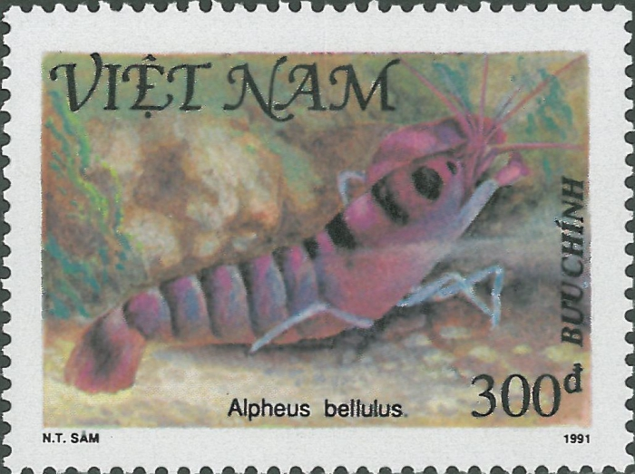 Alpheus bellulus