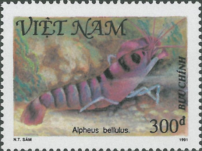 Alpheus bellulus
