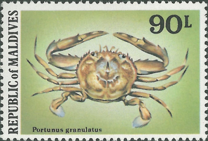 Cycloachelous granulatus