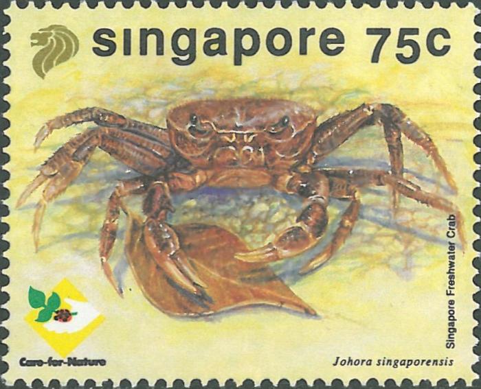 Johora singaporensis