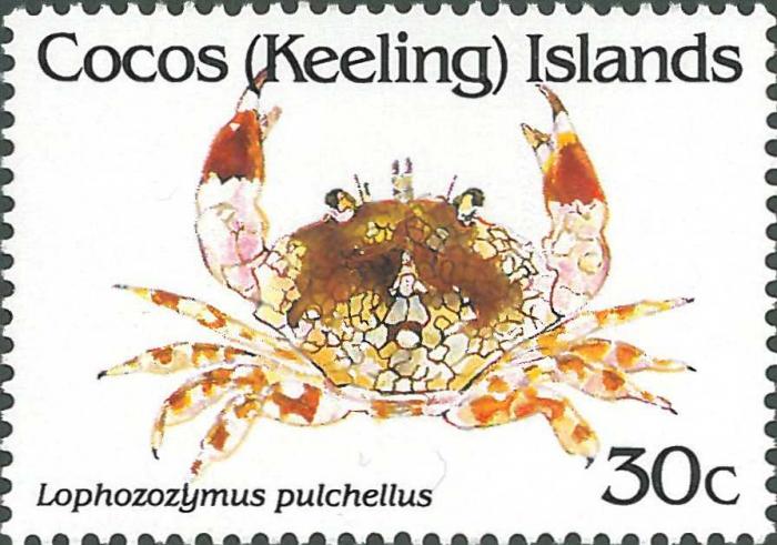 Lophozozymus pulchellus