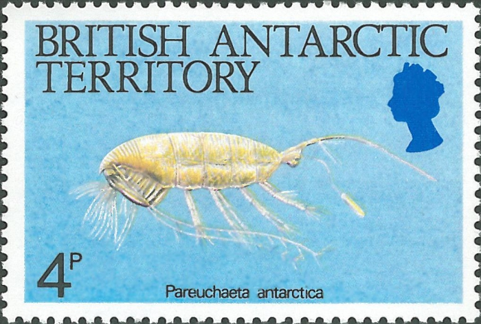 Paraeuchaeta antarctica